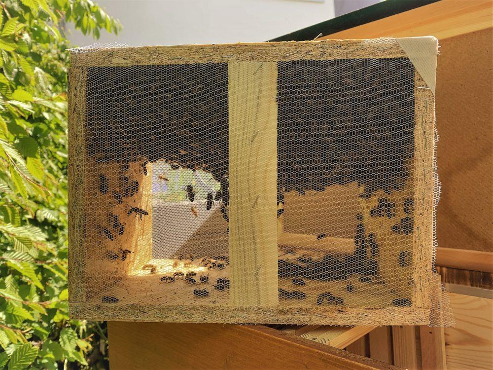 Schwarmkiste mit Bienen
